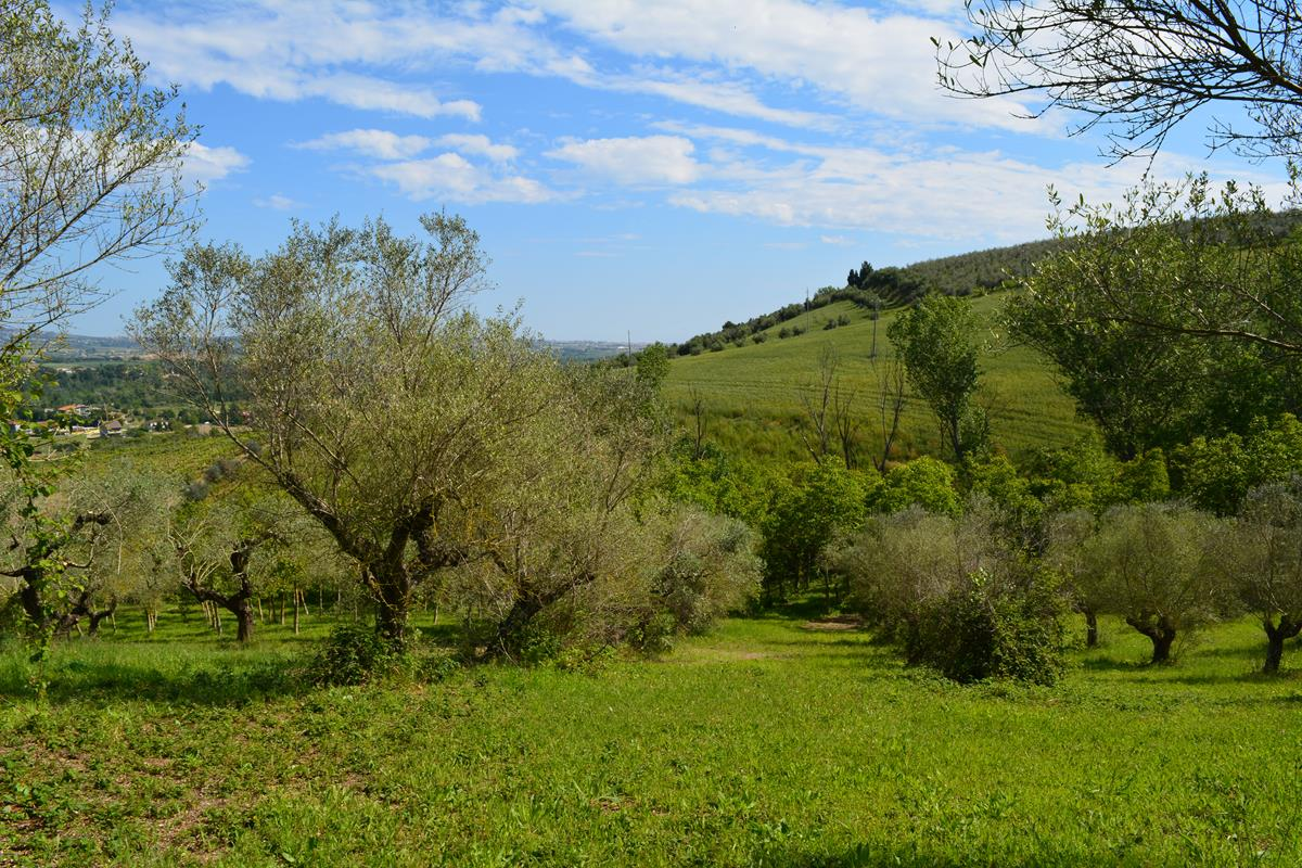 Terreno edificabile Moscufo Bivio Casone
